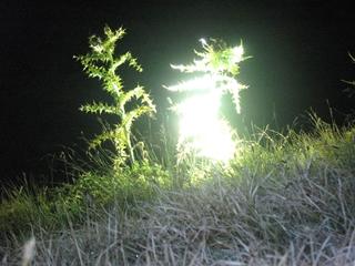 STE-EXPERIENCES devant un chardon illuminée